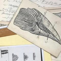 Dorothy Hill manuscript selection depicting images of corals and written text